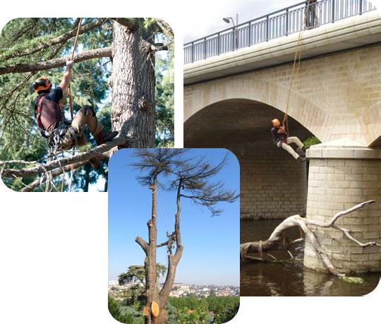élagage, soin des arbres et travaux acrobatiques sur Poitiers, la Vienne et les Deux Sèvres